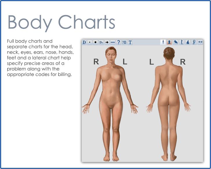 CureMD Dermatology Body Charts